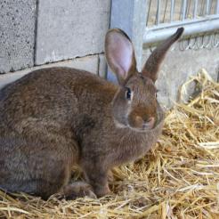 Kaninchen Melody