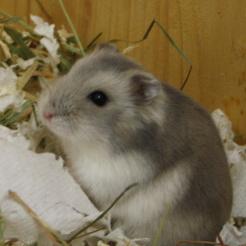 Profilbild von Chuya