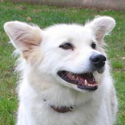 Hund Abby