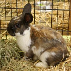 Profilbild von Katun