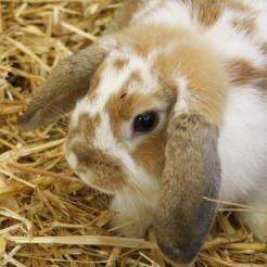 Kaninchen Taiga