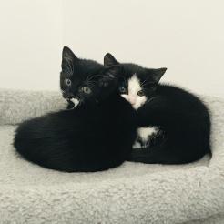 Profilbild von Marla & Lakira