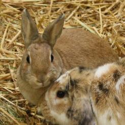 Kaninchen Huberta & Belukha