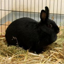 Kaninchen Henriette