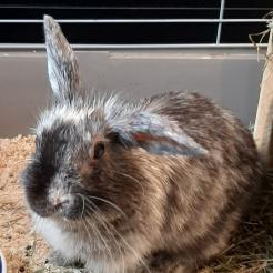 Kaninchen Mini