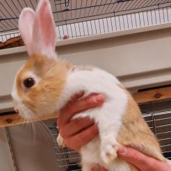 Kaninchen Kiki