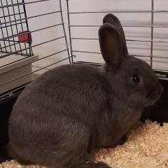 Kaninchen Puffi
