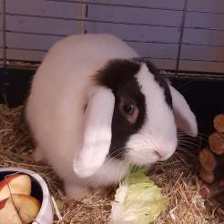 Kaninchen Ella