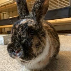 Kaninchen Jasmin