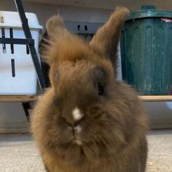 Kaninchen Jessi