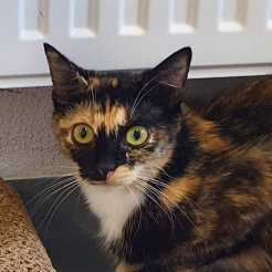 Katze Diane