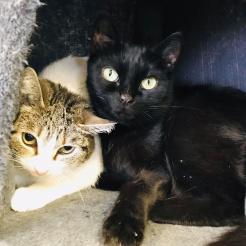 Katze Mücke und Luna