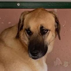 Hund Bailey