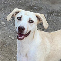 Hund Bella