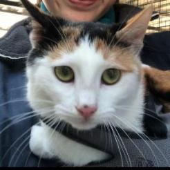 Profilbild von Belle