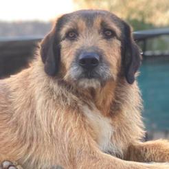 Profilbild von Bello (Bruno)