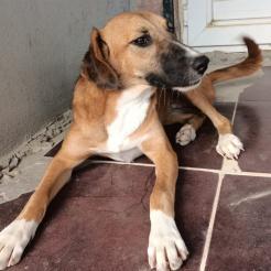Hund Berta