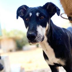 Profilbild von Cyra