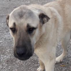 Hund Holly (Bhavana)