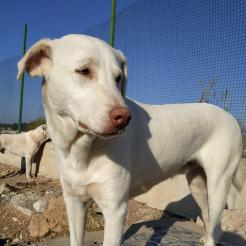 Hund Joschi