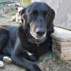 Hund Lara