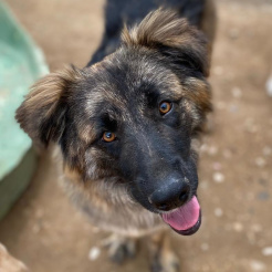 Profilbild von Leika (Fayola)