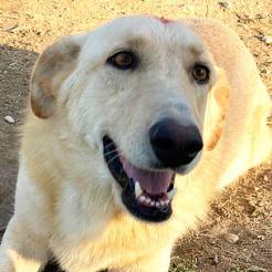 Hund Leyla