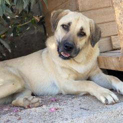 Profilbild von Xaver