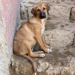 Hund Suna