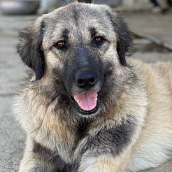 Hund Salima