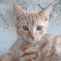 Katze Reddy