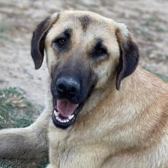Profilbild von Nala