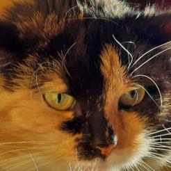 Katze Libelle  -  Auf Pflegestelle