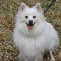 Hund Sammy