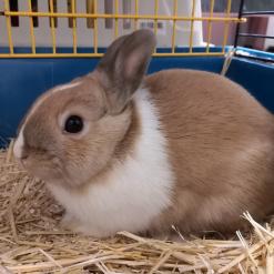 Profilbild von Lilo