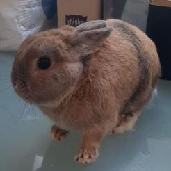 Kaninchen Elias