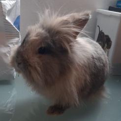 Kaninchen Candy