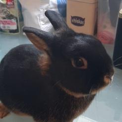 Kaninchen Johanna