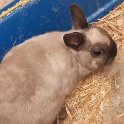 Kaninchen Zara