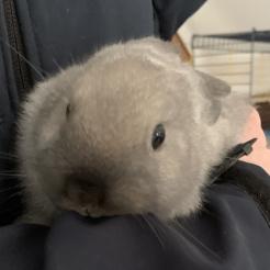 Kaninchen Littlefoot