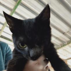Katze Piro