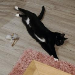 Katze Maja
