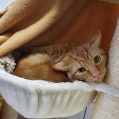 Katze Pamuk