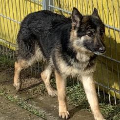 Hund Kira