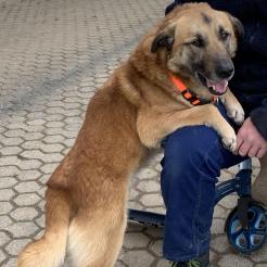 Hund Kasper