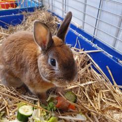 Kaninchen Rudi - hat eine Zahnfehlstellung
