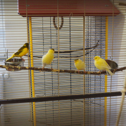 Vogel Die Gang