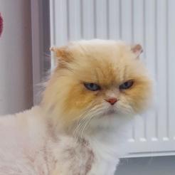 Katze Selina
