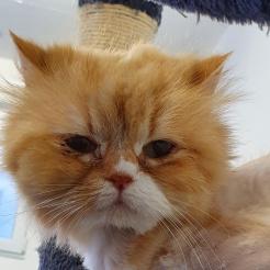 Katze Miranda