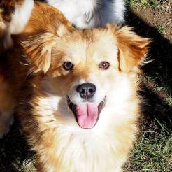Profilbild von Sweety